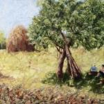 Haymaking break at Breb - Maramure